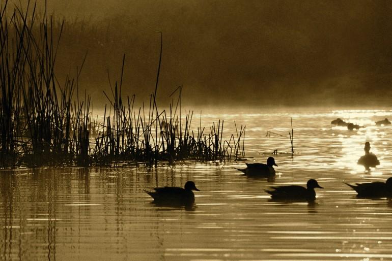The Hunting of The Duck  (Kuirisi-atakua)